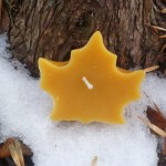 Maple Leaf - Natural(Golden)